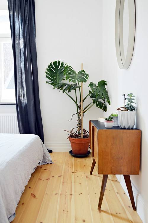 Monstera i badrummet.