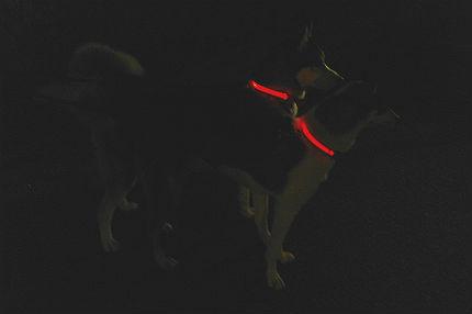 Lysande halsband till hunden