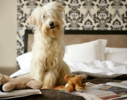Hund sittandes i sängen