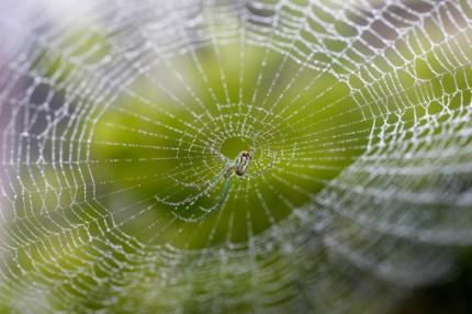 spindel i nät