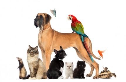 vakta husdjur