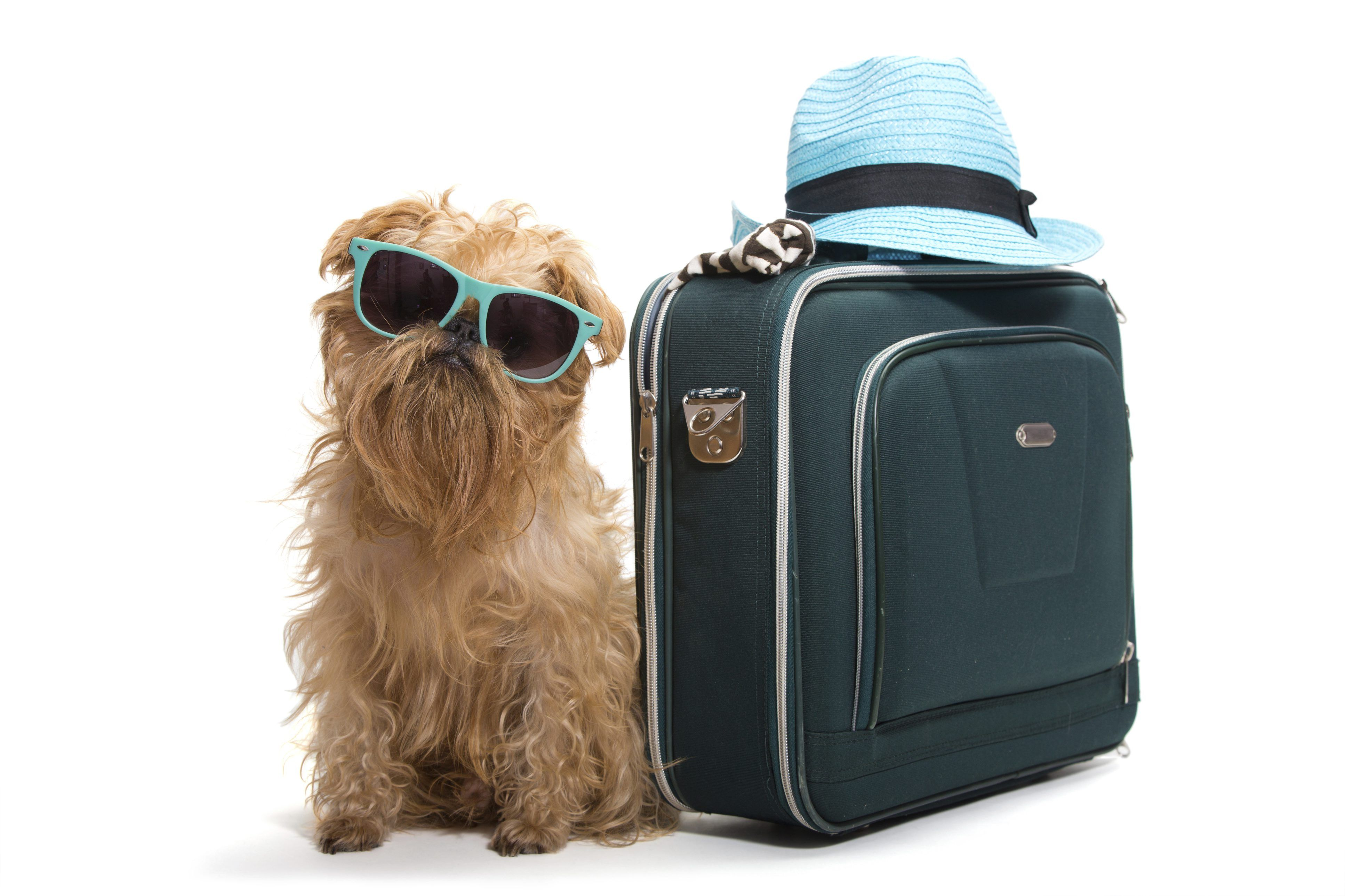 Hund p flyget for Traveling on a plane with a dog