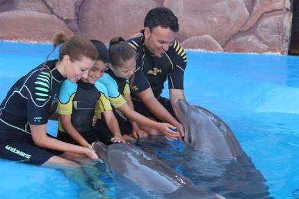 delfiner i Benidorm