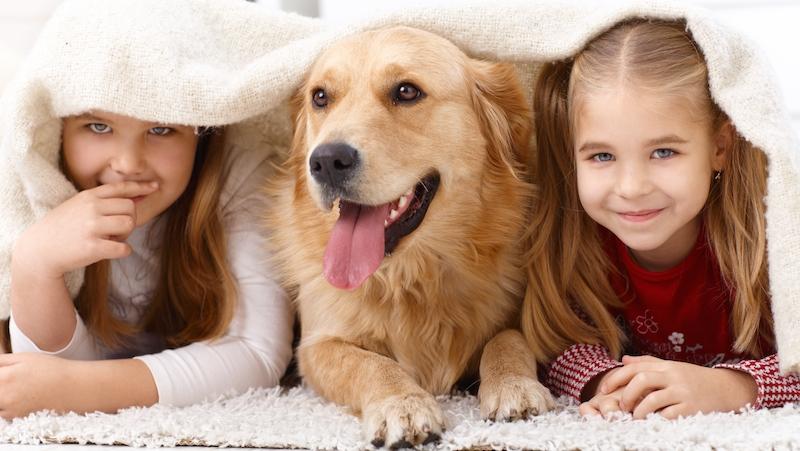 Husdjur gör underverk för både humöret och hälsan!