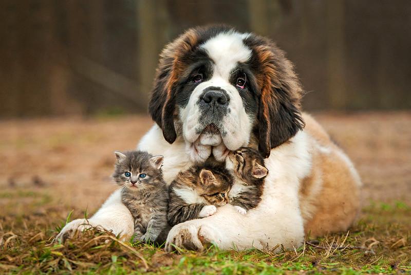 Hundar och katter lever nämligen gärna tillsammans och har sällskap av varandra, bara vi ger dem chansen! Foto: Shutterstock