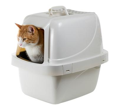 Innedass är ett bra alternativ till katernas vanliga låda.