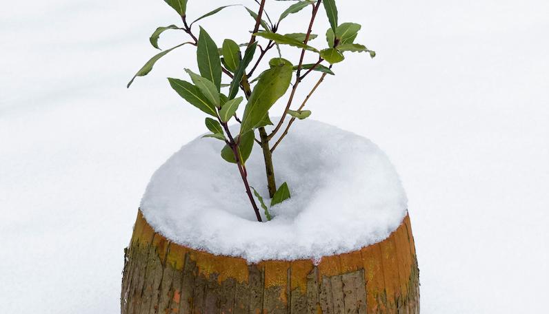 Vintern är en prövotid för åretruntboende i utekrukan.