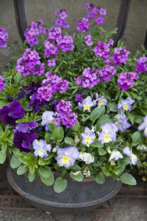 Vårplantering