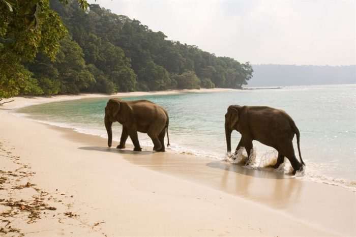 havelock-island-indien