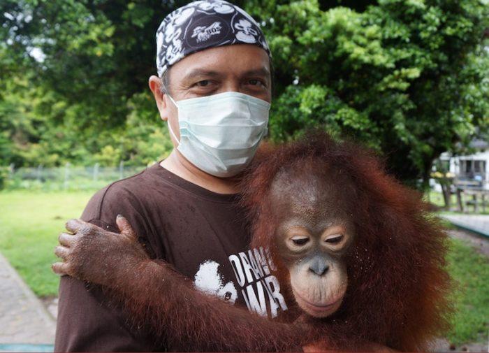 moza-orangutang