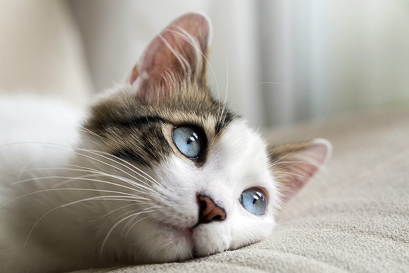 katt olika stora pupiller