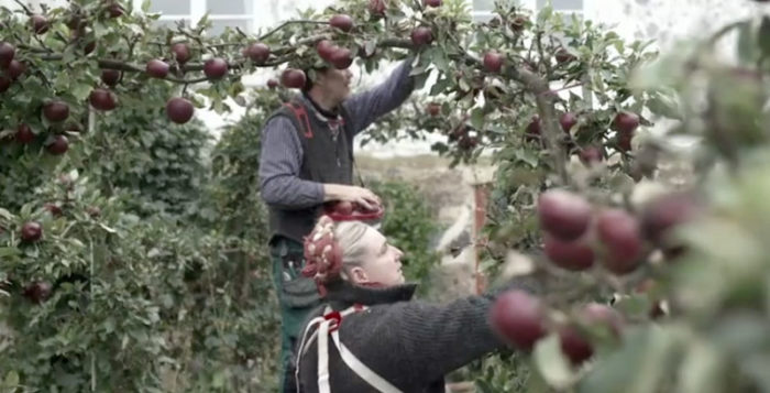 Under programmets gång har tittarna fått vara med då Mandelmanns bland annat skördar äpplen. Bild: TV4