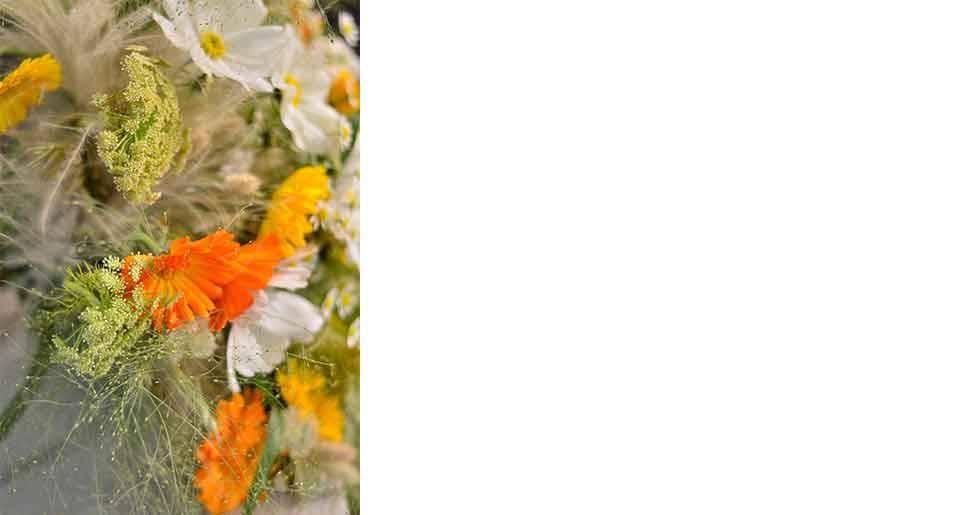 Vit rosenskära och ringblommor i olika färger blir en fin bukett tillsammans med fröställningar av exempelvis dill och torkat prydnadsgräs.