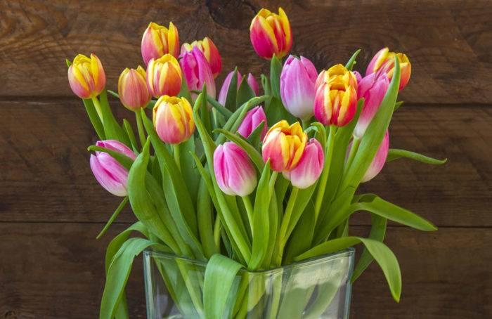 Tulpaner ska ha kallt vatten och helst stå svalt, inte i direkt solljus.