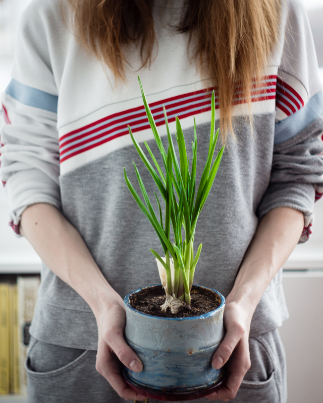 kvinna håller i kruka med vitlök odlad hemma