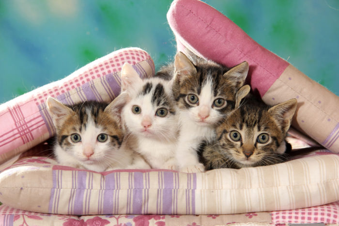Katter på kudde