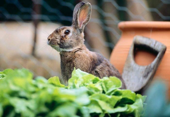 Kaniner – ett vanligt skadedjur i trädgården