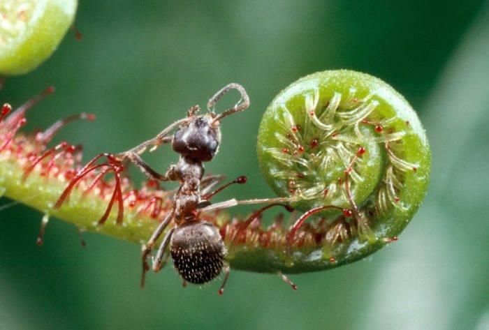 Myror kan förstöra mer än man tror i trädgården.