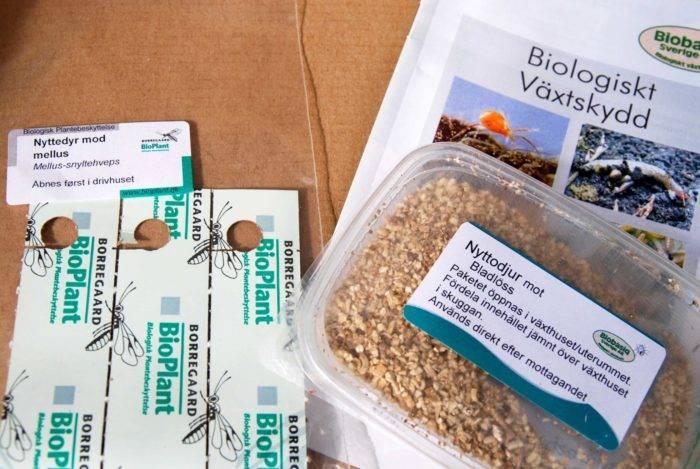Nyttodjur som minskar ohyrans skadeverkningar finns att köpa. Var noga med att identifiera vad som angripit dina växter så att du köper rätt nyttodjur.
