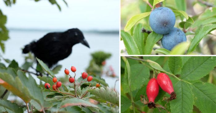 """Bilder ur boken """"Häxans årstider – magisk trädgård året runt"""""""