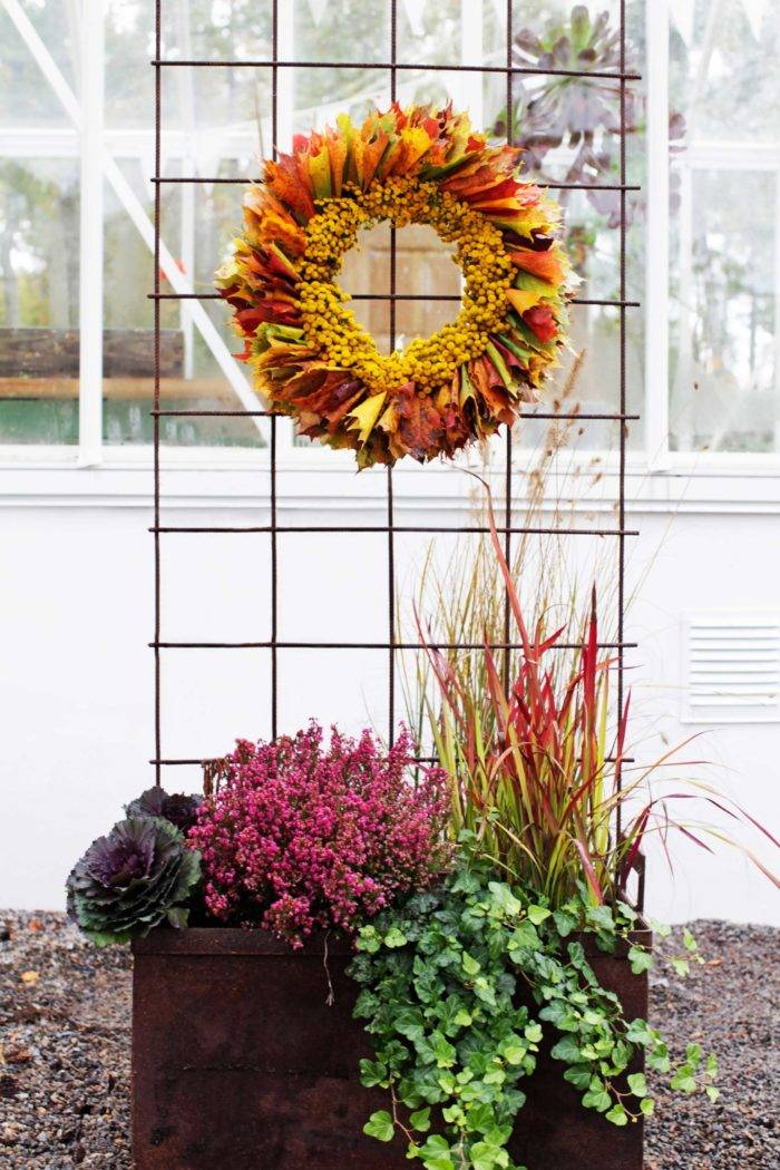 Här hänger den vackra höstkransen tillsammans med säsongens växter.