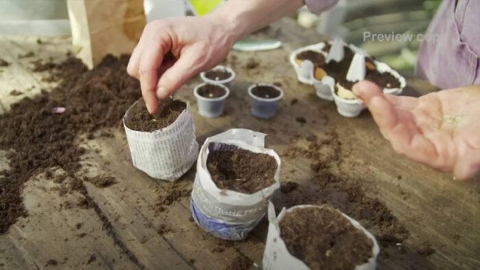 Mare Mandelmann planterar frön i egengjorda tidningspapperskrukor och äggskal.