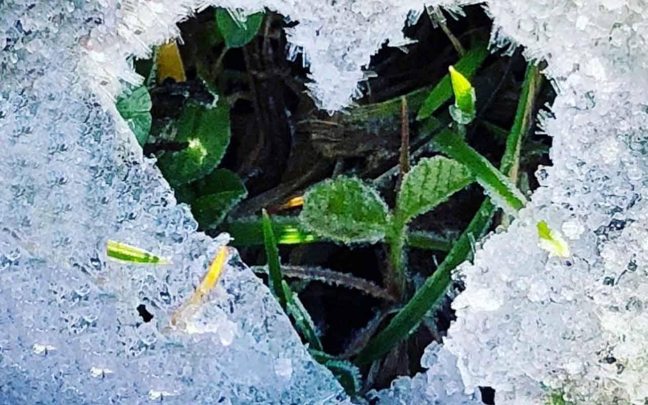 Agneta Sjödin hittar de flesta av sina hjärtan i naturen.