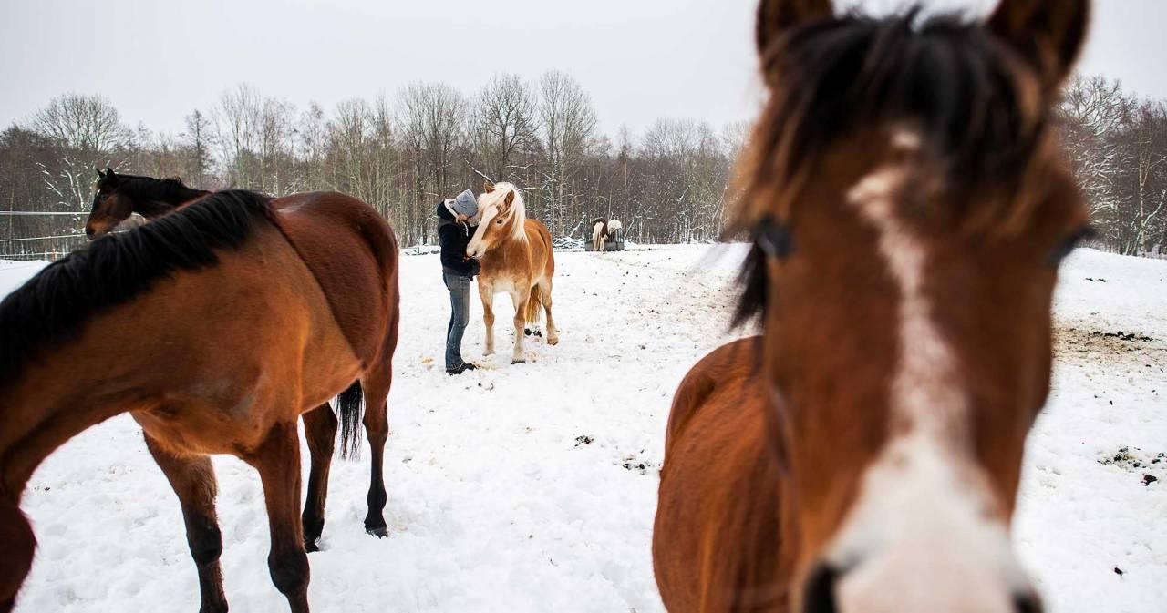 En som jobbade på kvinnojouren tog hand om en av Carinas hästar privat så att Carina kunde undkomma sin sambo. Foto: Birgitta Wiberg