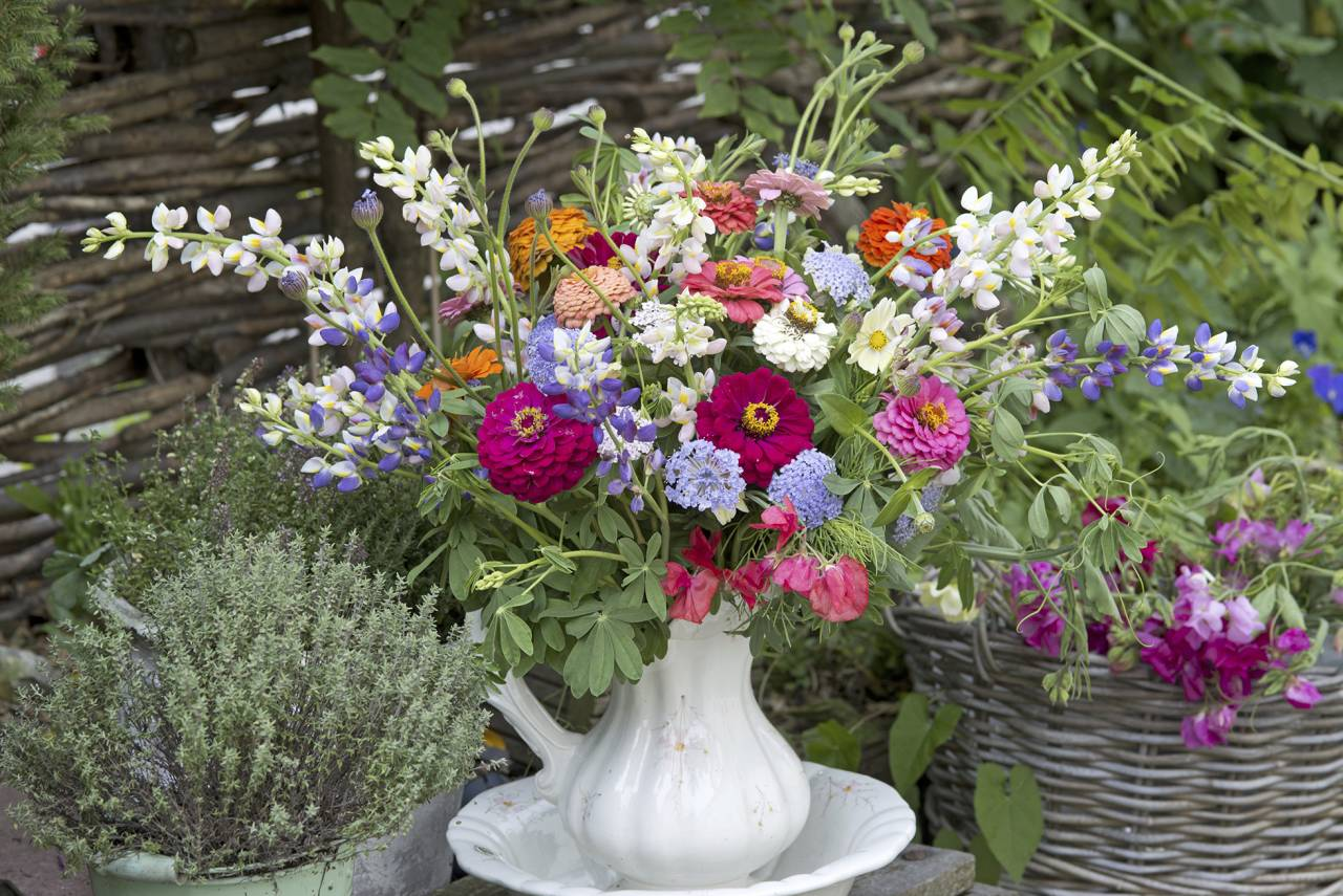 Vackra trädgårdsblommor i vas