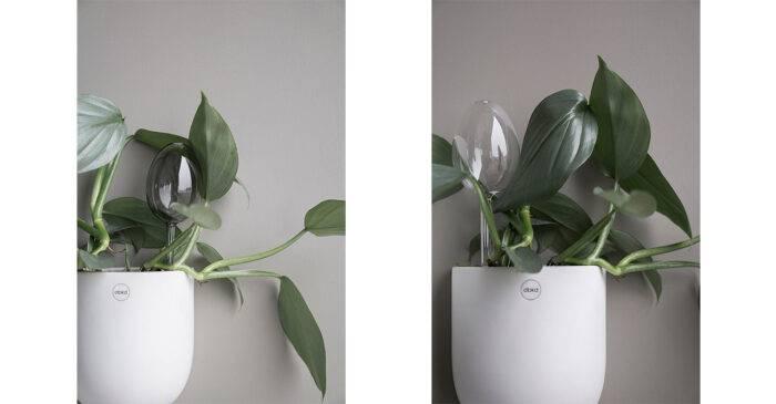 Självbevattnare till blommor i glas