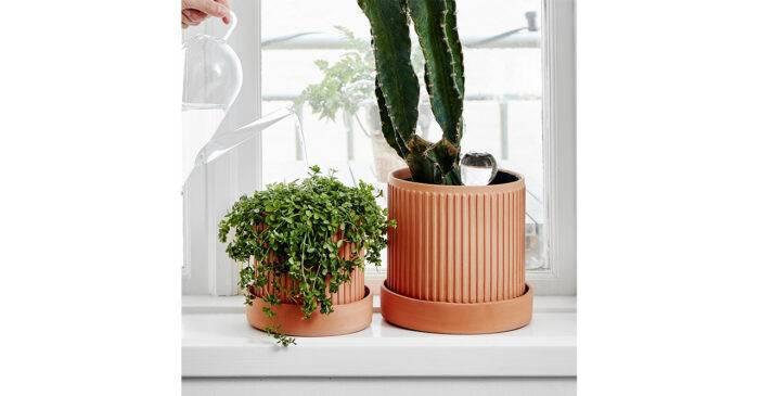 Glaskula som vattnar växterna åt dig