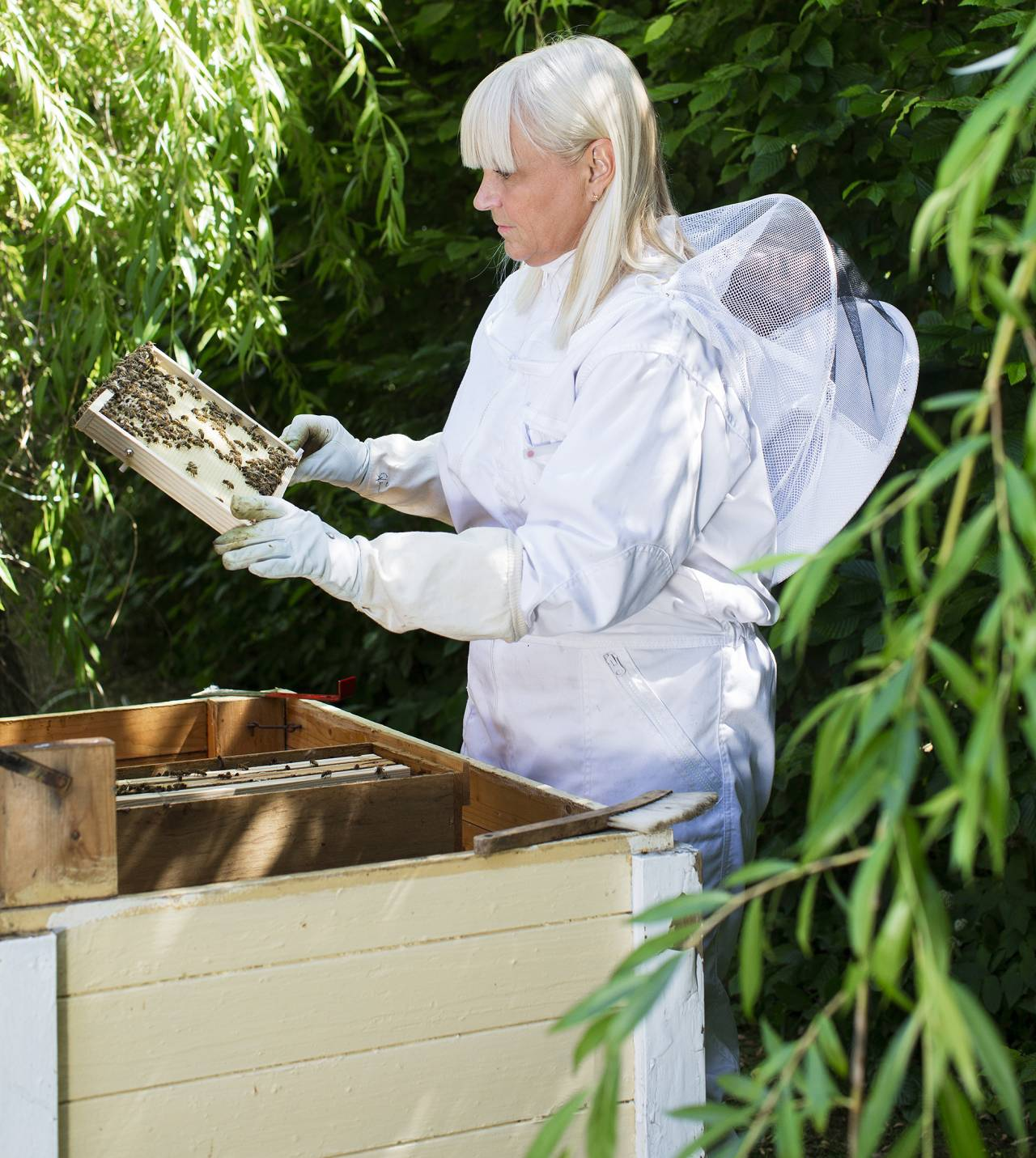 Stina Hedlund arbetar i sin bikupa