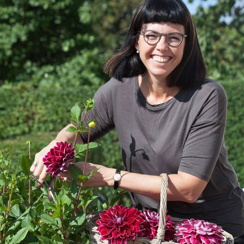 Karolina Brising snittar en dahlia i trädgården.