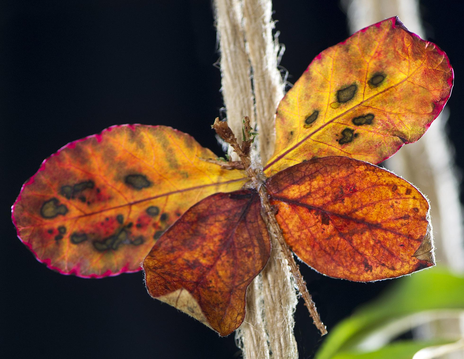 En konsgjord höstfjäril av höstlöv.