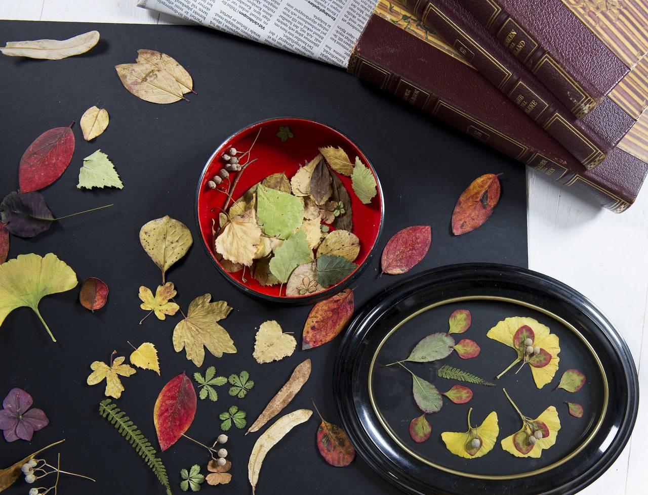 Konstverk av udda och färgstarka blad på svart papper.