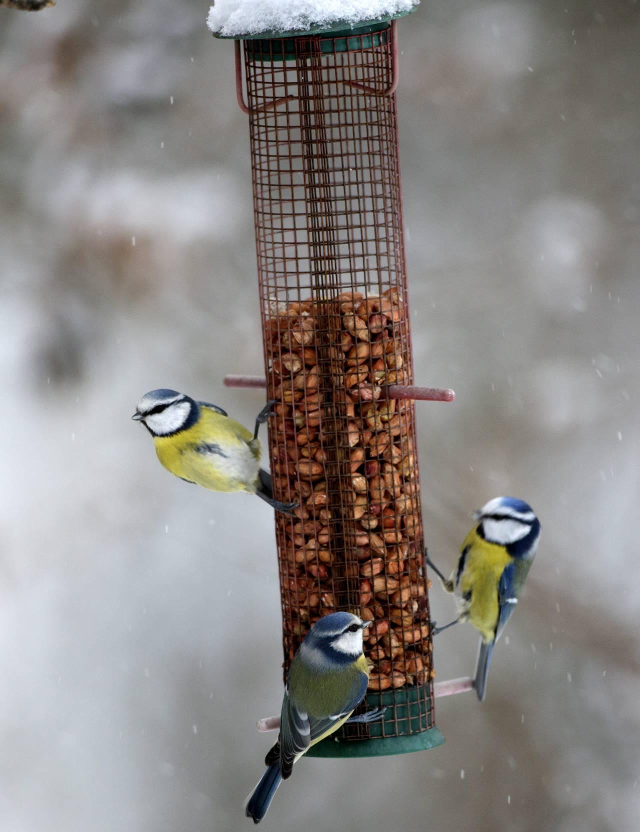 Fåglar äter på en fågelmatare med sittpinnar
