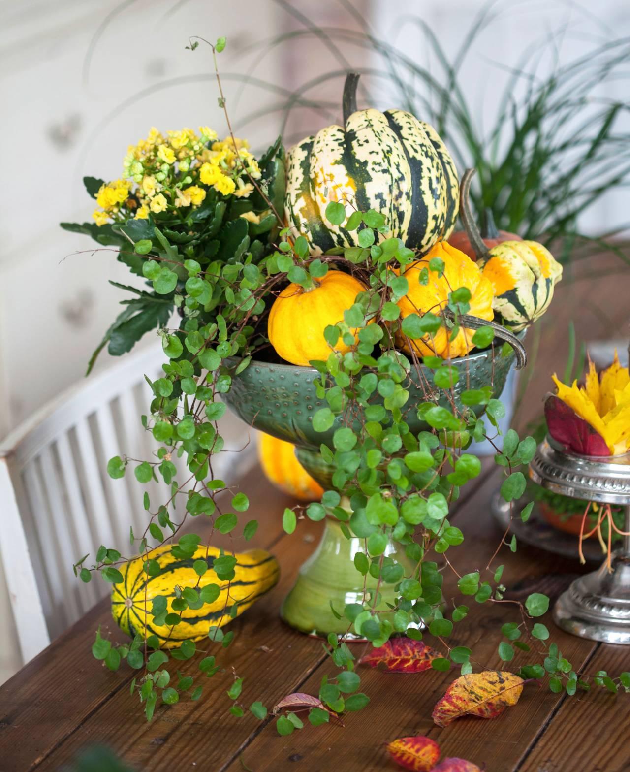 Skål fylld med blommor och pumpor.
