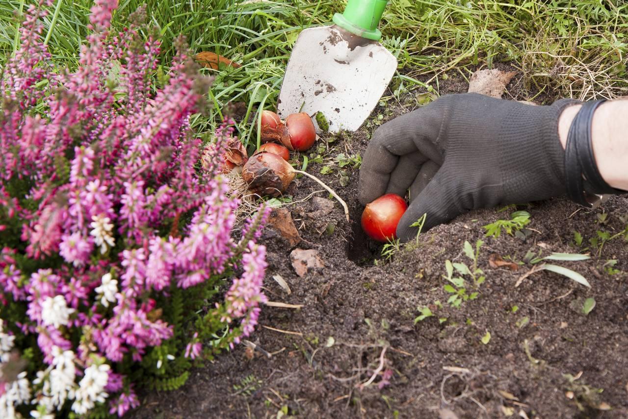 Plantering under höst och vinter