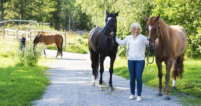 Helena Reje hästar