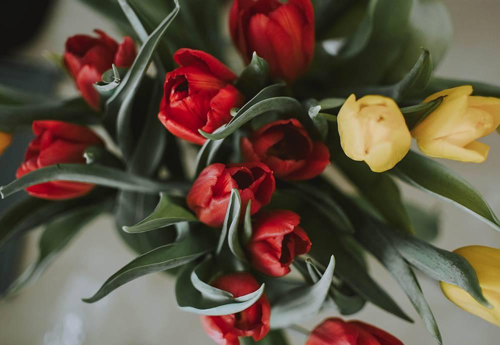 Röda och gula tulpaner på våren
