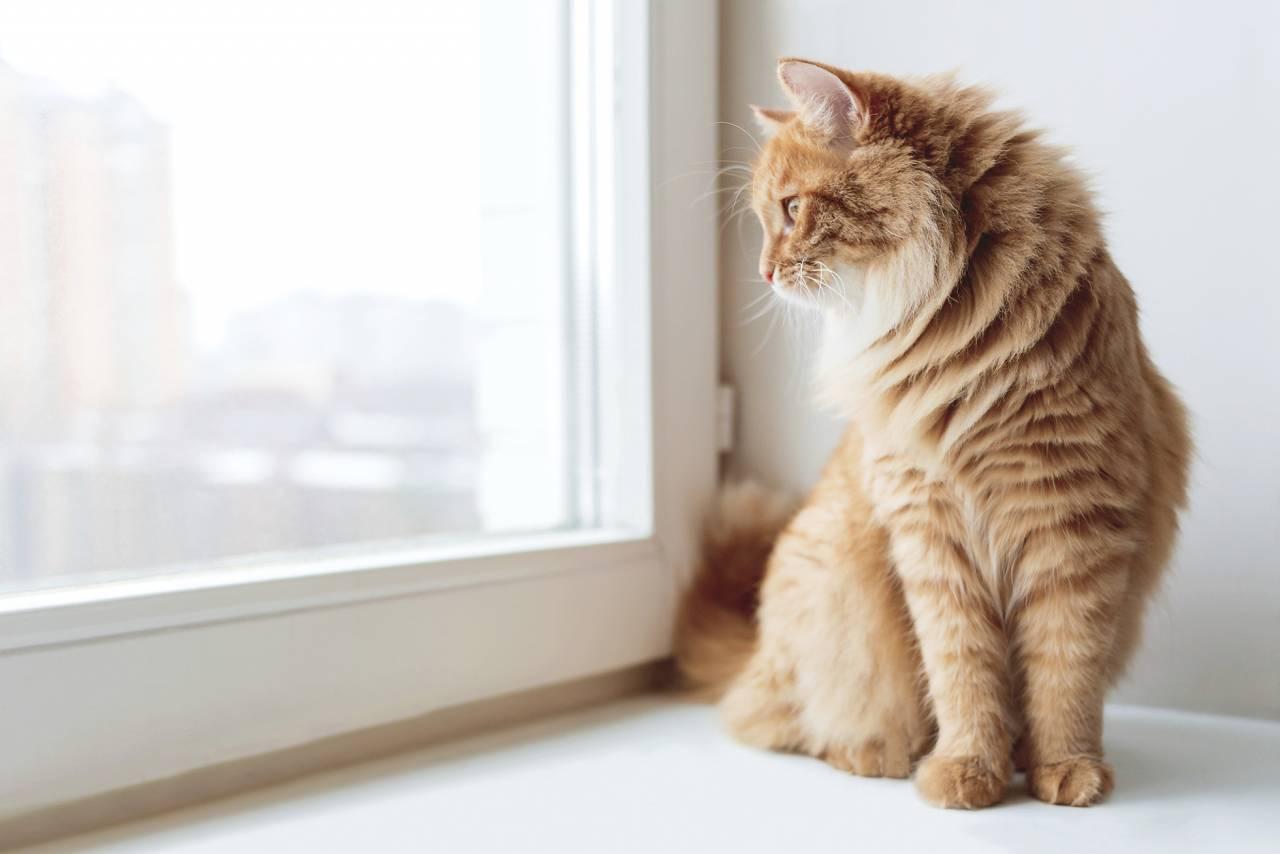 Katt med personlighetstyp Polisen
