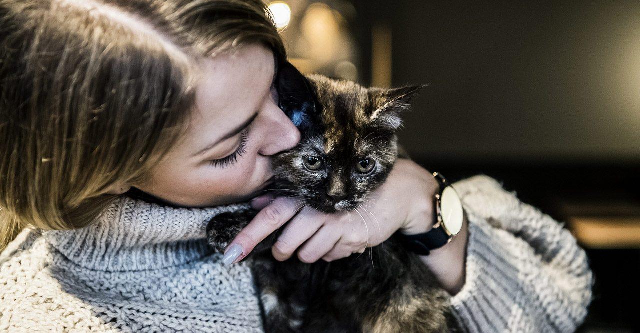 Nu öppnar Sveriges första kattkafé – så här funkar det!