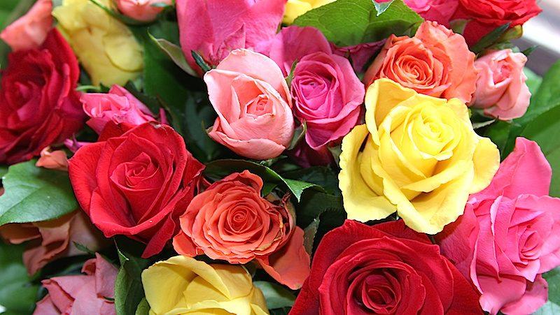 vad betyder olika antal rosor