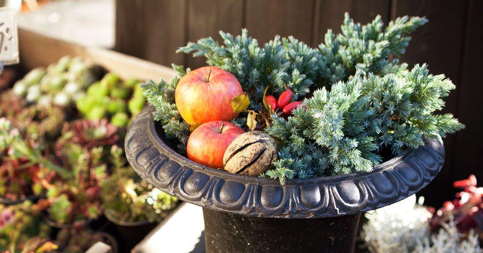 Höstkruka med barrväxter, äpplen, nypon.