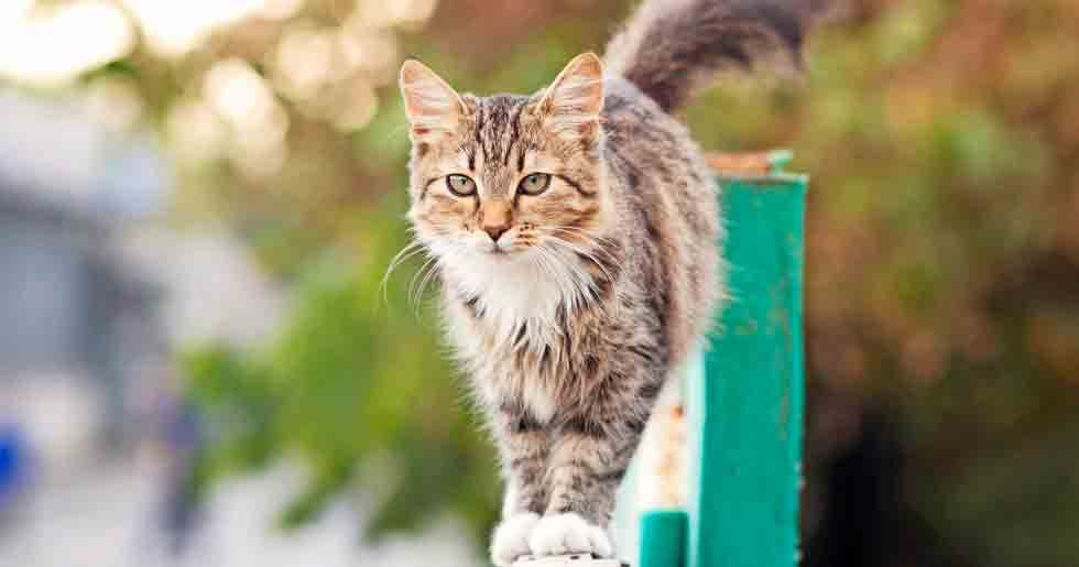 vilse.se katter