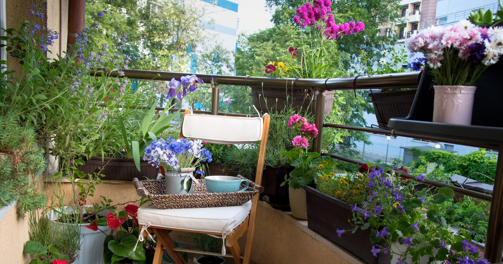 Blommor som trivs på skuggig balkong