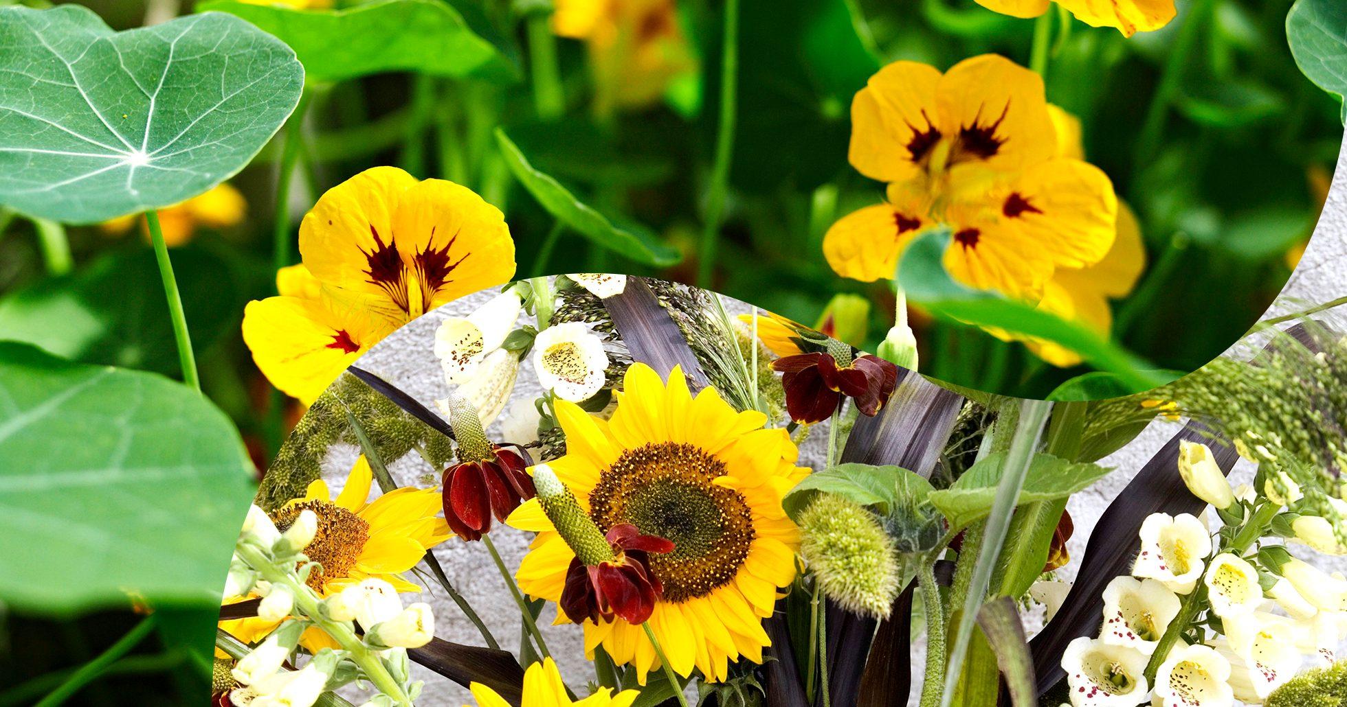 Kollage av gula blommor