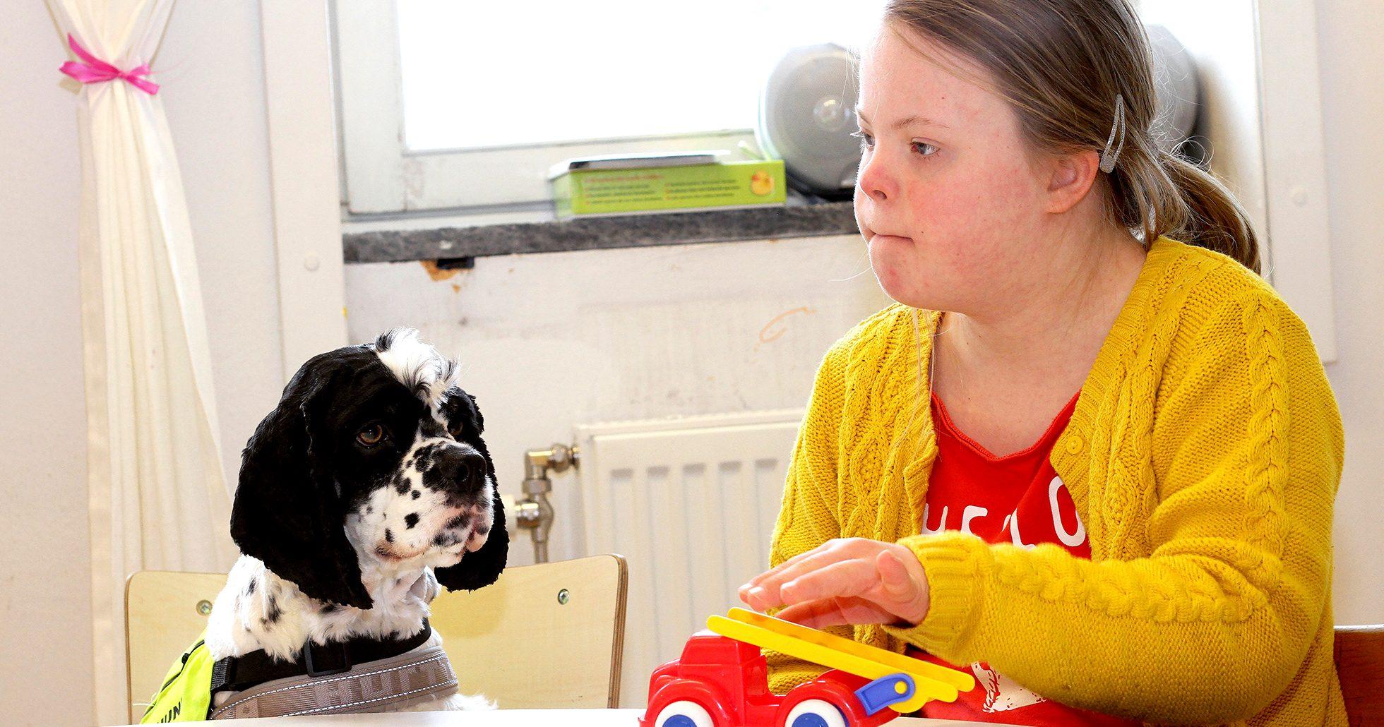 Skolhunden Bosse hjälper barn med speciella behov