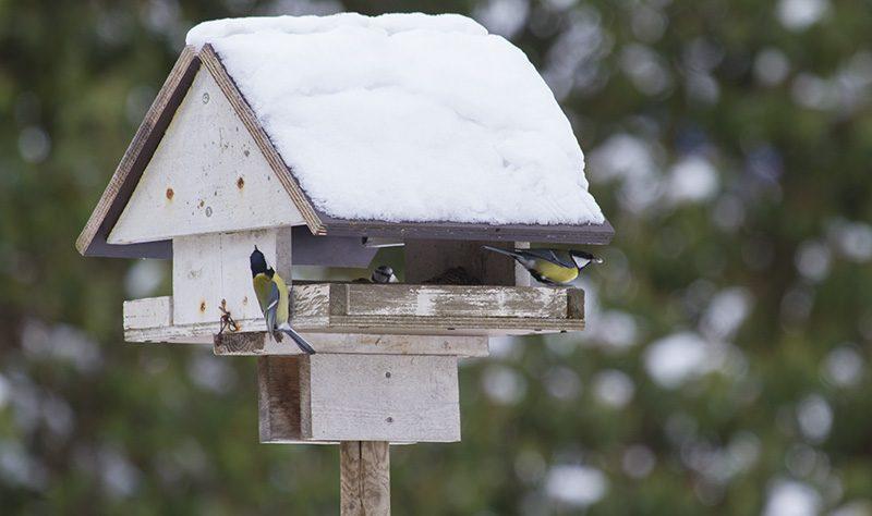 Här är sex saker du ska undvika när du matar småfåglar i vinter.