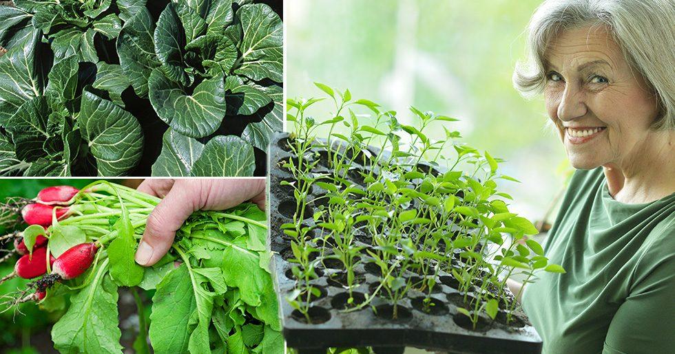 Sju roliga livsmedel du kan odla inomhus i vinter!